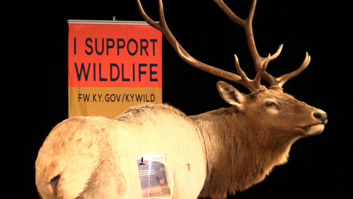 Annual elk drawing picks numerous locals for coveted tag
