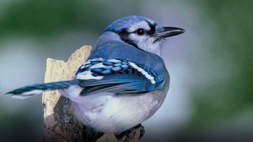 Mystery illness killing birds in six states